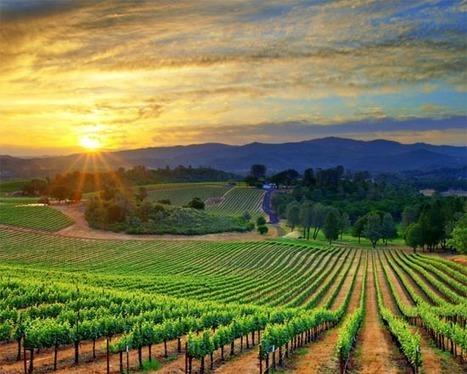 ¿Hacia dónde va el mercado mundial del vino? | Red Restauranteros - Noticias | Scoop.it