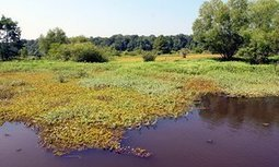 Amazon and eBay hosted ads for banned invasive species | Health & environment | Scoop.it