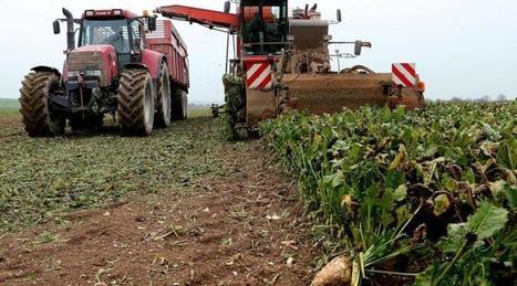 La betterave, cette belle plante méconnue - Ouest France   Agriculture en Pays de la Loire   Scoop.it