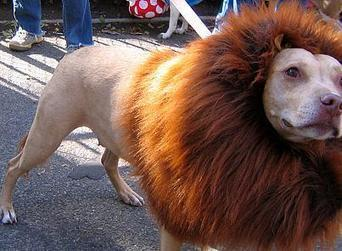 The lion that barked: China zoo under fire for disguising dog as lion - Not the best marketing #fail   MarketingHits   Scoop.it