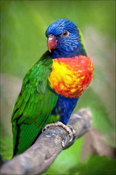 Lorikeet - Digital Grin Photography Forum | Everything Photographic | Scoop.it