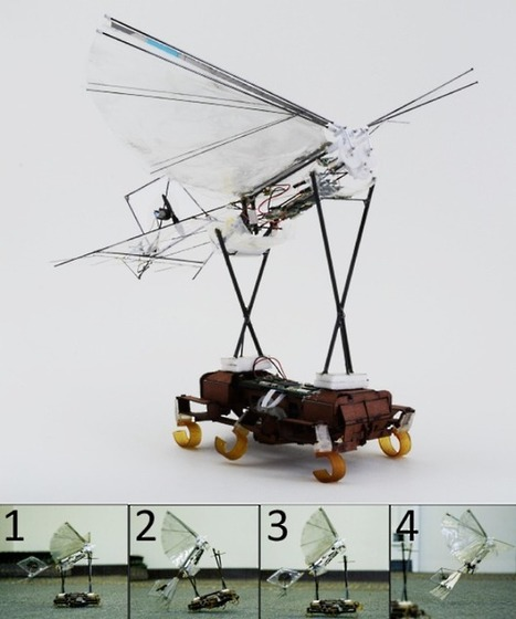 Robotic Cockroach Launches Robotic Bird Off of Its Back - IEEE Spectrum | Heron | Scoop.it