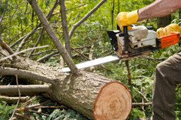 The proven tree service for you iin your town is by MJs Tree Care | MJs Tree Care | Scoop.it