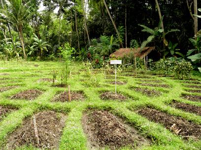 3 maggio, giornata internazionale della permacultura  - Comune-info | Ecologia Evolutiva | Scoop.it