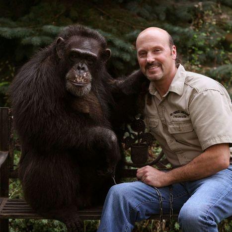 Animal rights group seeks to 'free' Kiko, the Niagara Falls chimp  - The Buffalo News | Animal Sciences | Scoop.it
