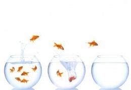 Wallpaper fish, fish tanks, jump, water, splash Desktop Background - global Aqua Link   Aquaculture Products & Marketing Network   Scoop.it