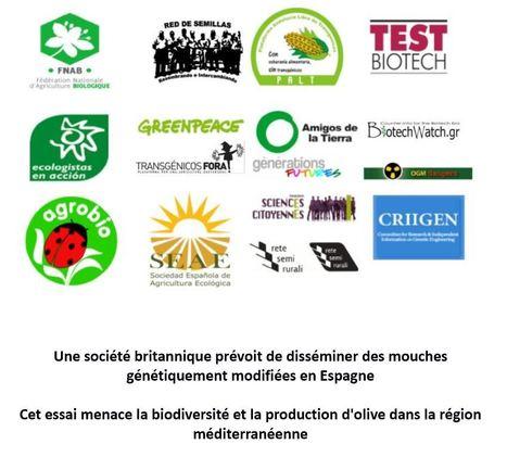 Le gouvernement catalan refuse de recourir aux mouches OGM   EntomoNews   Scoop.it