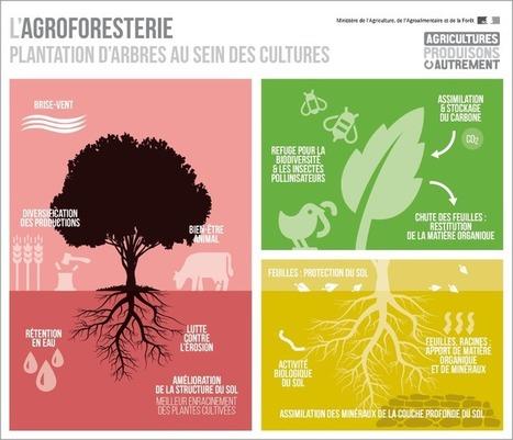Tout ce que vous devez savoir sur l'agro-écologie - Ministère de l'agriculture, de l'agroalimentaire et de la forêt | Biogaz | Scoop.it