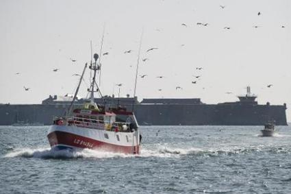 EU bans sea bass trawling to save species | Sustain Our Earth | Scoop.it