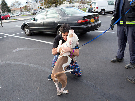 Pets Lost and Found After Hurricane Sandy : People.com | Ask The Cat Doctor | Scoop.it