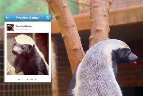 Le Zoo de Johannesburg utilise un véritable blaireau comme Community Manager ! | Cabinet de curiosités numériques | Scoop.it