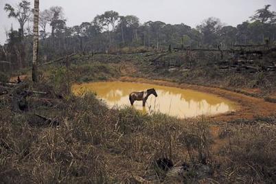 « Non, l'agroécologie n'est pas une agriculture de niche ! » | Questions de développement ... | Scoop.it