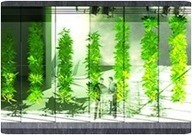 The Vertical Farm Project - Agriculture for the 21st Century and Beyond   www.verticalfarm.com   Zero Footprint   Scoop.it