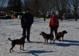 Le canicross, une discipline sportive qui gagne à être connue - Express Drummondville | Le sport avec un chien - Sport with dogs | Scoop.it