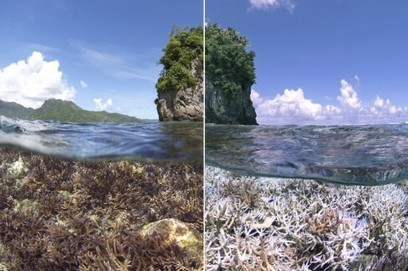 Scientists say a dramatic worldwide coral bleaching event is now underway - The Washington Post | Water Stewardship | Scoop.it