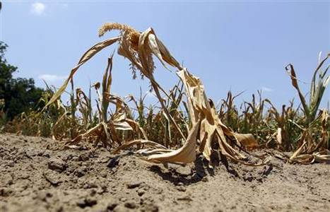 Current Events: Drought tightens grip on top US farm states | The Barley Mow | Scoop.it