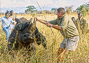 Can we afford to experiment with rhinos? | Rhino | Scoop.it