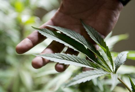Washington state prepares for marijuana retail sales - Press Herald   Marijuana Facts   Scoop.it
