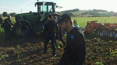 Un champ de maïs OGM illégal détruit par l'Etat | Abeilles, intoxications et informations | Scoop.it