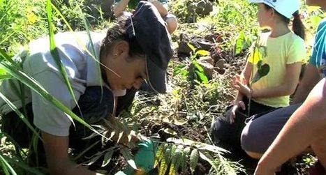 Sauver la forêt, préserver les arbres endémiques de La Réunion   Le flux d'Infogreen.lu   Scoop.it