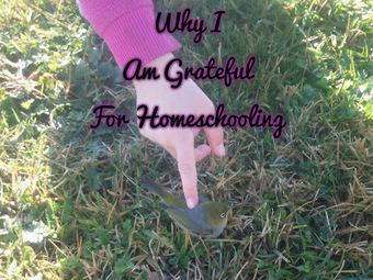 Aussie Pagan Homeschool: Why I am Grateful for Homeschooling | APH - HomeSchool Articles | Scoop.it