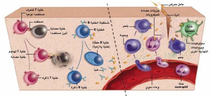 (AR) (EN) - Immunity's Early-Warning System / نظام التحذير المناعي المبكر | Luke A. J. O'Neill | Glossarissimo! | Scoop.it