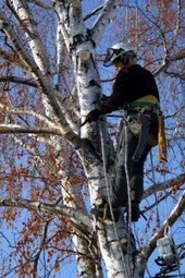 Woods Tree Svc is a premiere tree service contractor in Southaven, MS | Woods Tree Svc | Scoop.it