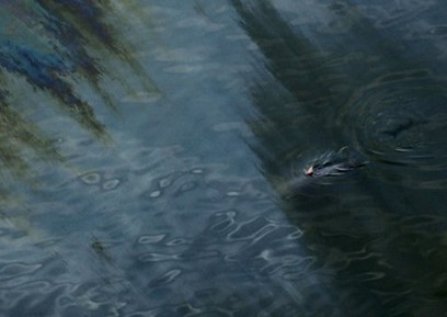 Study links BP oil spill to dolphin deaths   BUSS4   Scoop.it