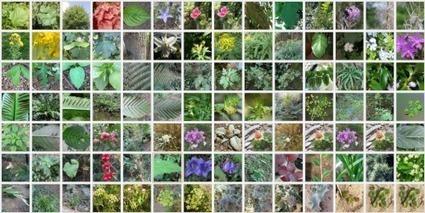 500 000 données d'observations botaniques sur Tela! | Sciences participatives, pratiques collaboratives | Scoop.it