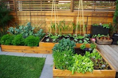 Porqué un huerto puede mejorar tu vida | Hábitos Vitales | Paz y bienestar interior para un Mundo Mejor | Scoop.it