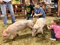 Beware at fair: New flu virus can pass from pigs to people | It's Show Prep for Radio | Scoop.it