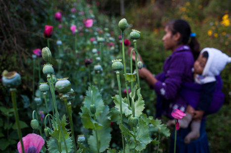 Young Hands in Mexico Feed Growing U.S. Demand for Heroin | Upsetment | Scoop.it