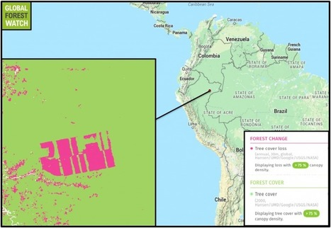 Cacao plantation ramping up forest clearing in Peru | Rainforest EXPLORER:  News & Notes | Scoop.it