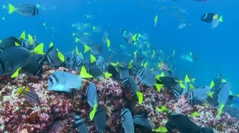 Galapagos: un paradiso naturalistico unico (video) | ma, davvero, davvero? | Scoop.it
