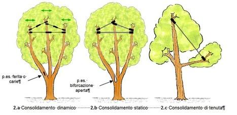 doc green » Blog Archive » Il consolidamento delle chiome degli alberi   Parchi Avventura e attrezzature   Scoop.it