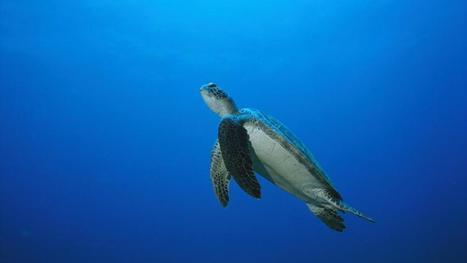 Trois mécanismes qui expliquent l'hécatombe des espèces marines   Mes passions natures   Scoop.it