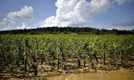 French winegrowers fear for harvest after hail batters prized vineyards | farming ks2 | Scoop.it