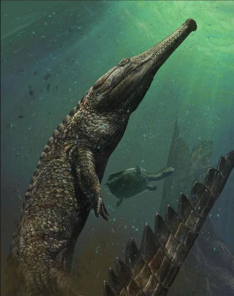 Un fossile de crocodile géant mis au jour en Tunisie - National Geographic | Zones humides - Ramsar - Océans | Scoop.it