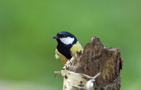 Oiseaux et papillons d'Ile-de-France, victimes collatérales des pesticides - leJDD.fr | Biodiversité | Scoop.it