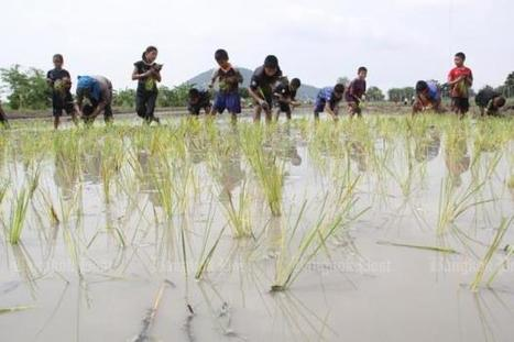 Organic rice a saviour for struggling farmers | 2Develop | Scoop.it