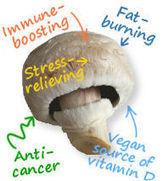 Health Benefits of Eating Mushrooms – From Anti-Cancer Effects to Stress Relief | Healthcare | Scoop.it