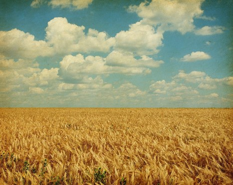 How Monsanto's Climate Unit Is Changing Risk Profile of Farmers | Weather | Scoop.it