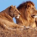 Facts About Wild Animals | Pets Health | Scoop.it