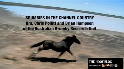 Wild Horse Research Through the Lens of Dr. Chris Pollitt: Brumbies in the Channel Country | The Jurga Report: Horse Health, Welfare, and Care | Scoop.it