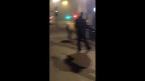 Enfin la vidéo du Lama dans le Tram de Bordeaux! | Trollface , meme et humour 2.0 | Scoop.it