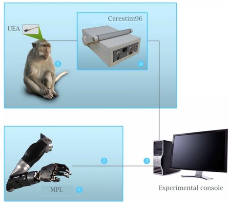 Creating a sense of touch in a prosthetic hand   Amazing Science   Scoop.it