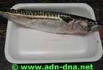 532 - Dissecció d'un peix | Blog adn-dna | Scoop.it