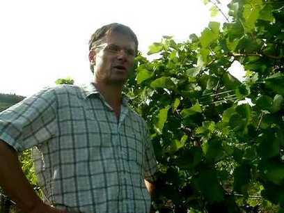 """Marc Hugel #Alsace : """"2014 will be a year for the history books of #Riesling """" 