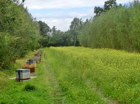 Installation d'un rucher expérimental à la Station des Cormiers (Saint Aubin du Cormier - 35) | Réseau des apiculteurs bretons | Scoop.it