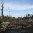 MIFEE's massive seizure of indigenous lands is causing starvation and poverty in Papua | Climat | Scoop.it